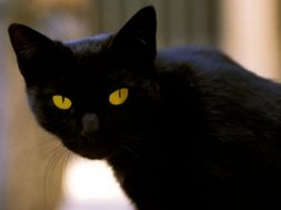 tommaso-zamploutos-mauros-gatos