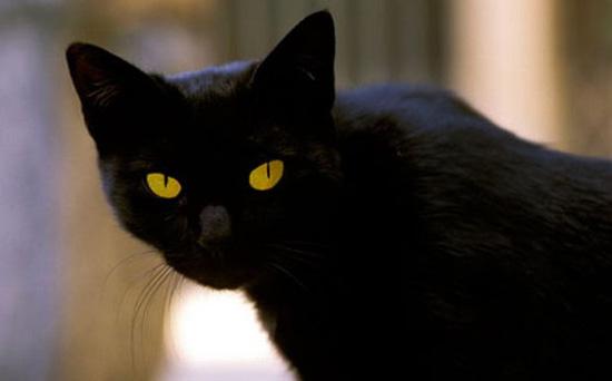 Ο γάτος κυκλοφόρησε χθες και άκουσε μια καυτή είδηση!