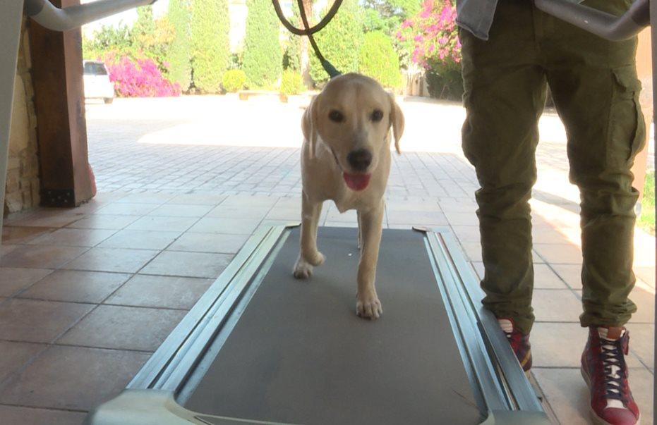 Απίστευτο βίντεο! Σκύλος στην Λάρνακα κάνει… διάδρομο γυμναστικής!