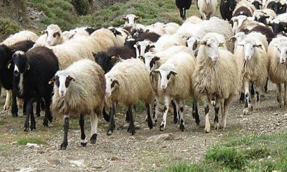 """""""Ο κτηνοβάτης είχε έλλειψη έρωτα-Αρχείο 30 ετών για Κύπρο"""""""
