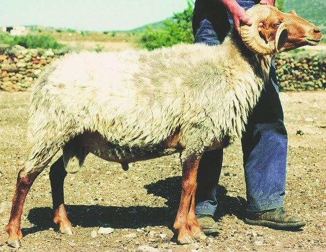 Κτηνοβασία: Η ποινή που προβλέπεται στην Κύπρο – Πρωτοφανής υπόθεση