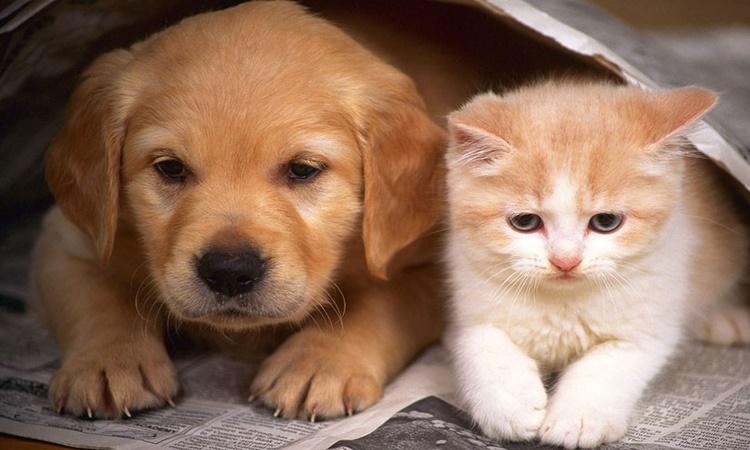 Πρωτοποριακό πρόγραμμα περίθαλψης και στείρωσης εγκαταλελειμμένων ή αδέσποτων γάτων και σκύλων