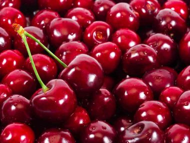 Can-Dogs-Eat-Cherries