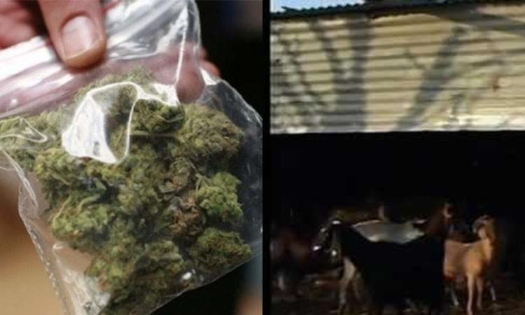 Μέλος μεγάλης σπείρας ναρκωτικών ο 24χρονος που συνελήφθη στη Λάρνακα