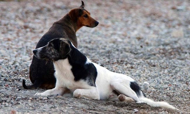 ΛΑΡΝΑΚΑ : Σπείρα διαρρηκτών «χτύπησε» κλέβοντας κυνηγετικά σκυλιά