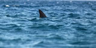 Καρχαρίας δύο μέτρων εντοπίστηκε στη Μεσόγειο (vid)