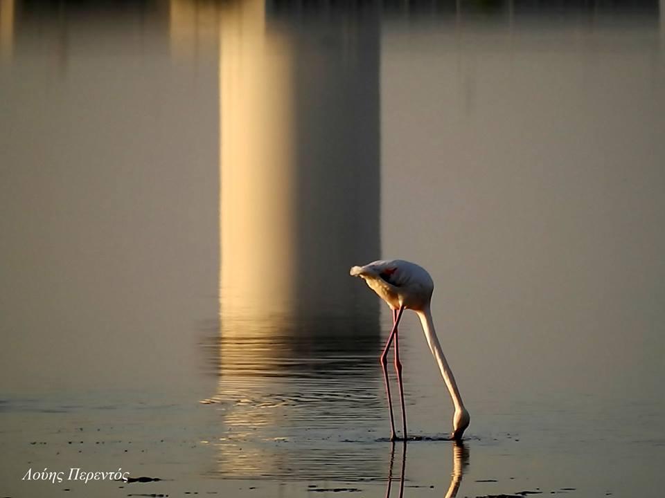 Μια ακόμη πανέμορφη φωτογραφία του φίλου Λούη Περεντού από την Αλυκή Λάρνακας