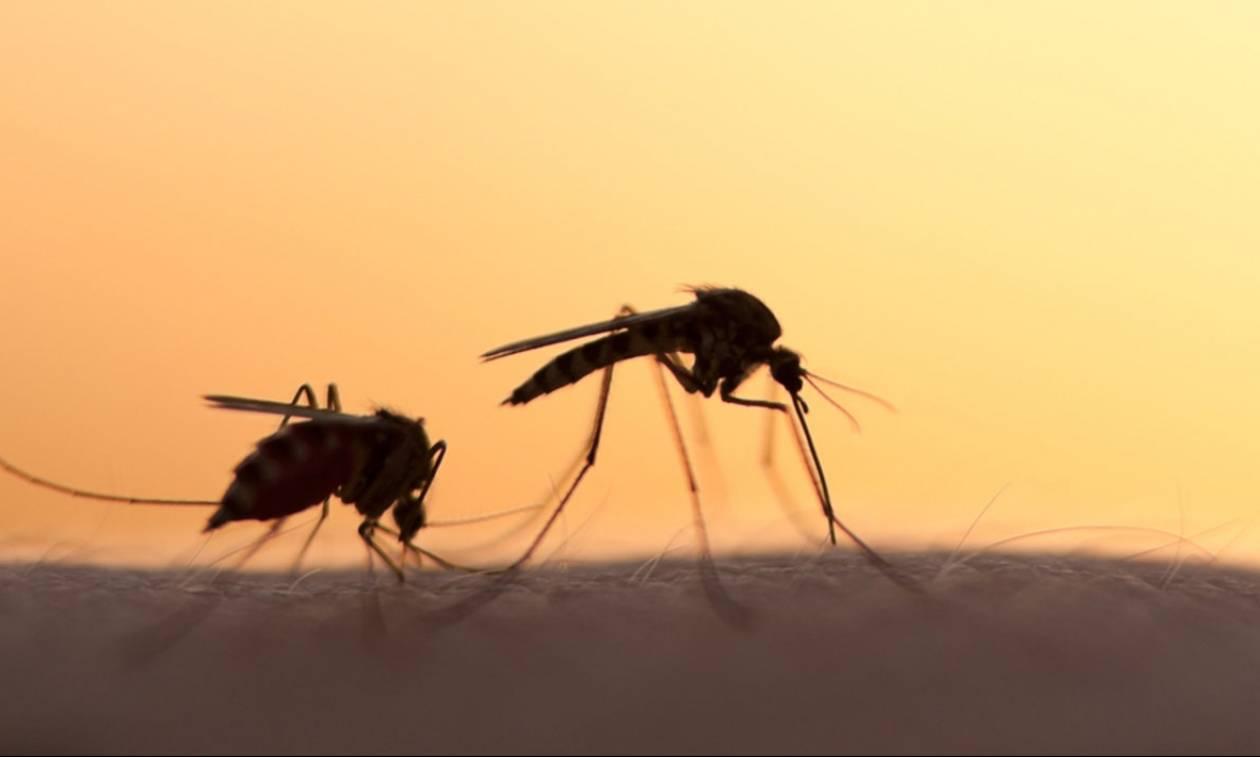 Φέτος θα δώσεις μεγάλη μάχη με τα κουνούπια