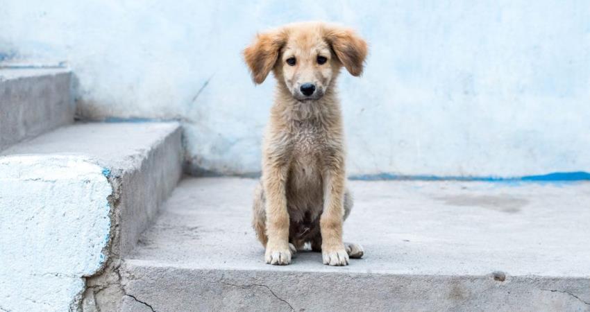 Μέτρα από τον Δήμο Λάρνακας για τα απορρίμματα σκύλων, έπειτα από παράπονα μαθητών