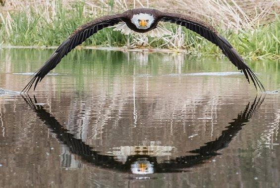 Η φωτογραφία του φαλακρού αετού που έγινε παγκόσμιο viral