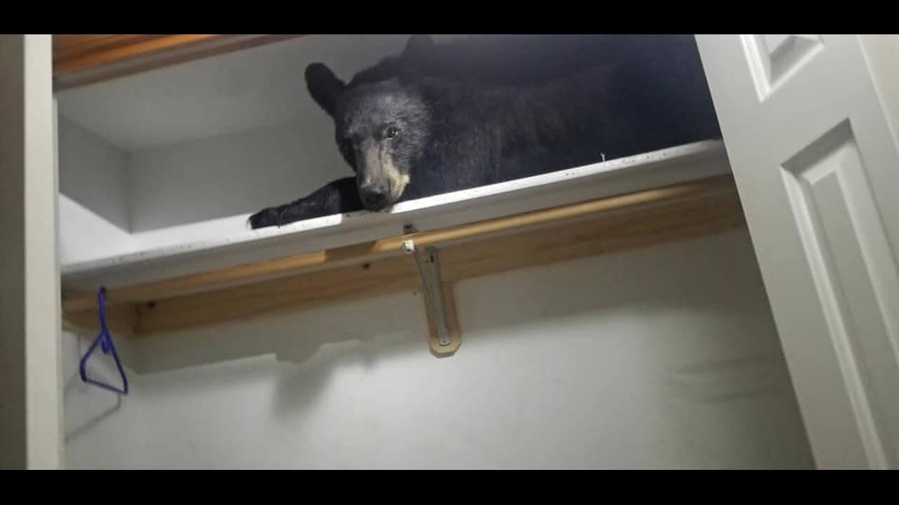 Άνοιξαν τη ντουλάπα τους και βρήκαν μία… αρκούδα!