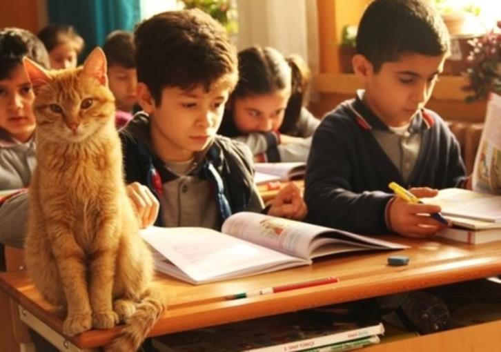 Η ιστορία του Tombi, του πορτοκαλί γάτου που υιοθετήθηκε από σχολείο στη Σμύρνη