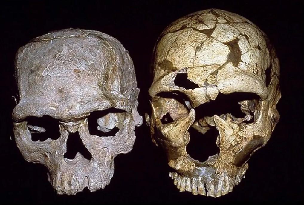 Το αρχαιότερο δείγμα κρανίου Homo Sapiens ανακαλύφθηκε στην Ελλάδα