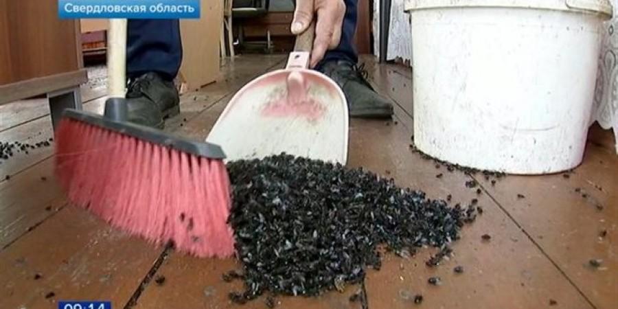 Εκατομμύρια μύγες εισέβαλαν σε χωριό της Ρωσίας (pic)