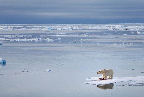 Ένα βίντεο δείχνει πώς θα μοιάζει η Ανταρκτική όταν λιώσουν οι πάγοι