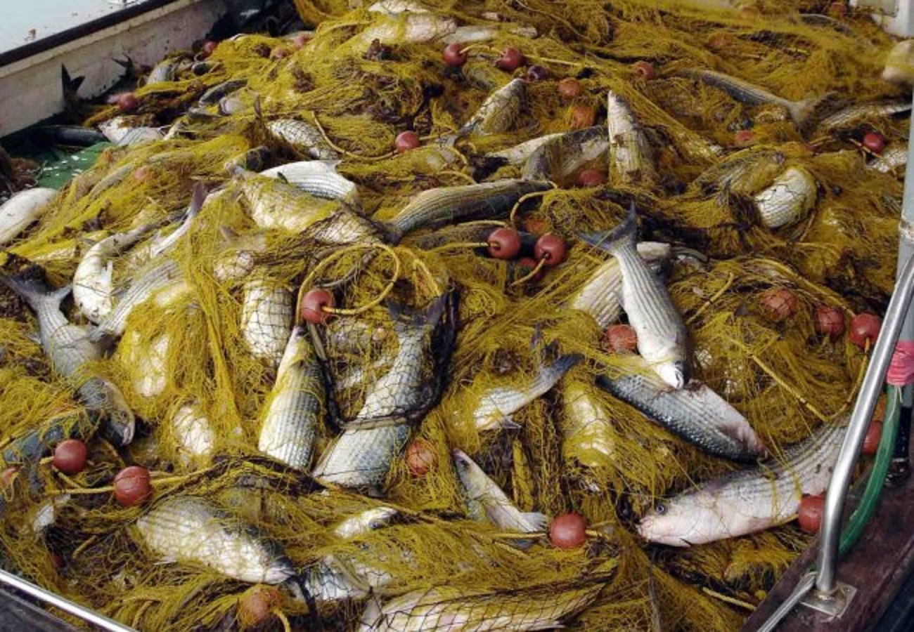 Το Φεστιβάλ Ψαριού στο Ζύγι είναι πλέον γεγονός