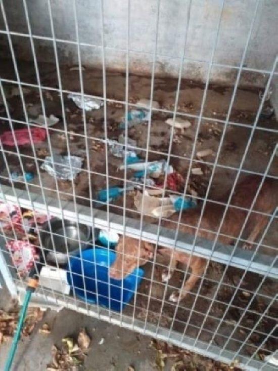 Σκύλος κλειδωμένος σ' ακάθαρτο δωμάτιο στη Λάρνακα