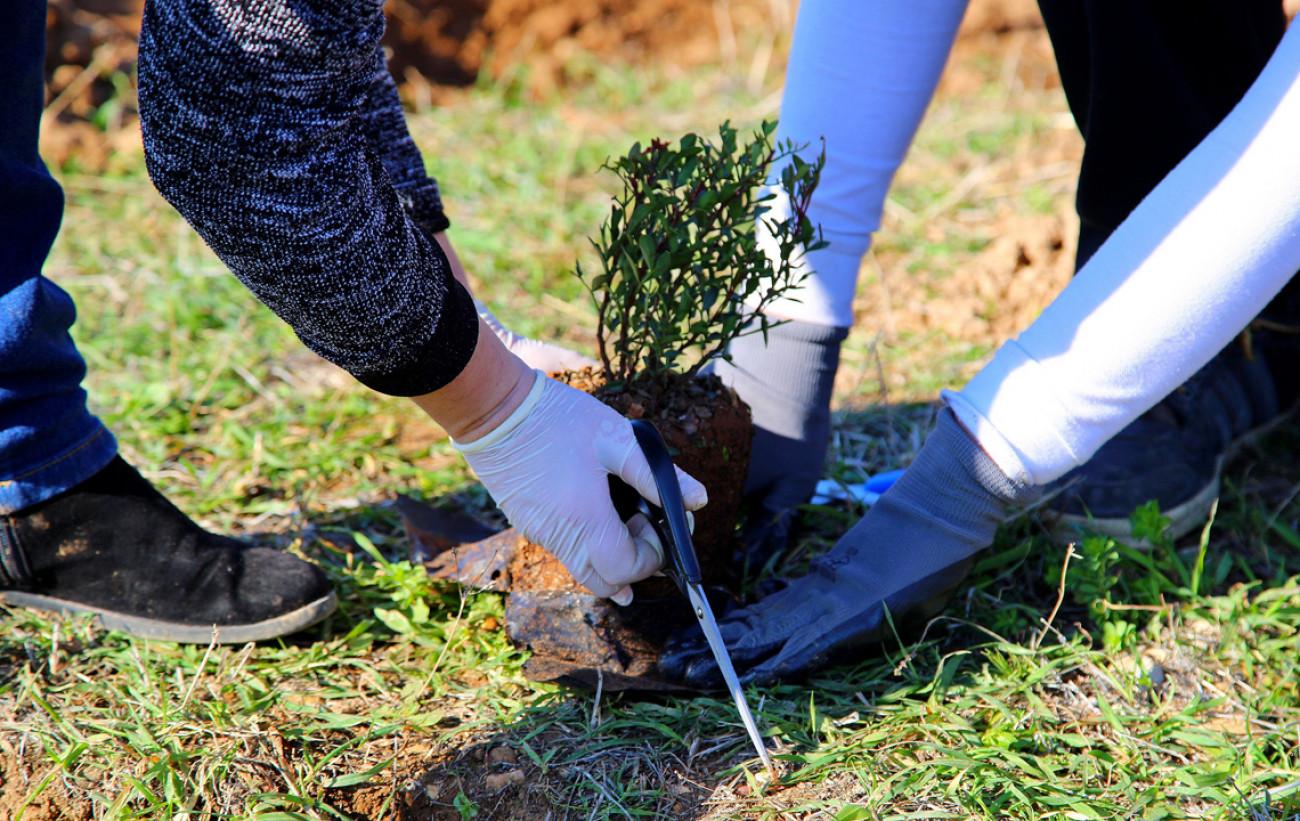 Ο Δήμος Αραδίππου και η Πρωτοβουλία 100.000 δέντρα διοργανώνουν δεντροφύτευση