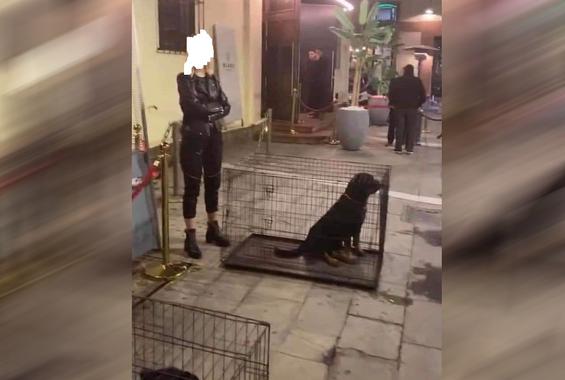 Σάλος για τα Ροτβάιλερ-πορτιέρηδες σε μαγαζί της Θεσσαλονίκης