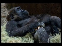 19-22-38-gorilas3.jpg