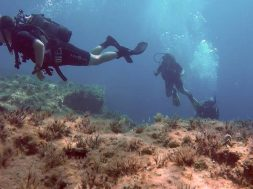 Amphitheatre-Diving-Site-6