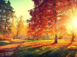 Autumn-or-Fall-Feature-e1508178401601-1024×739