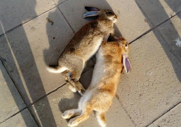 Κόμμα Ζώων: Δεν θα δεχθούμε κουκούλωμα για τα έκτροπα στο Παραλίμνι
