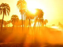 __opt__aboutcom__coeus__resources__content_migration__mnn__images__2018__07__palm_trees_hot_sun-f8e20b86425b492f9d777d92db46db49