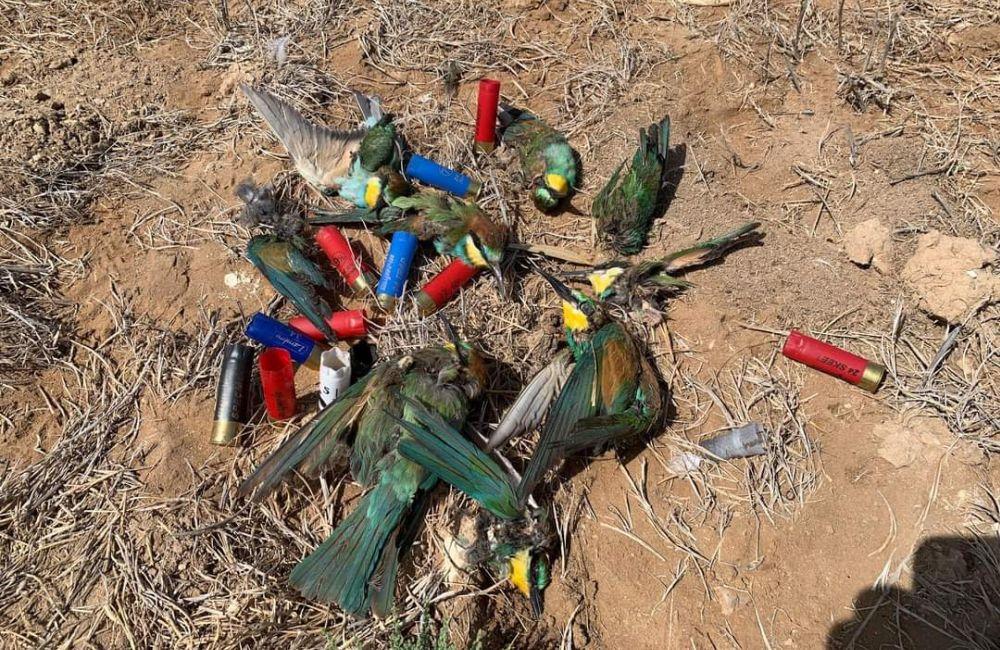 Πυροβολούν και σκοτώνουν προστατευόμενα είδη στο Μενεού