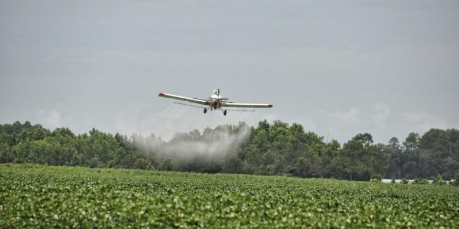 Έρχονται αεροψεκασμοί για καταπολέμηση της πιτυοκάμπης