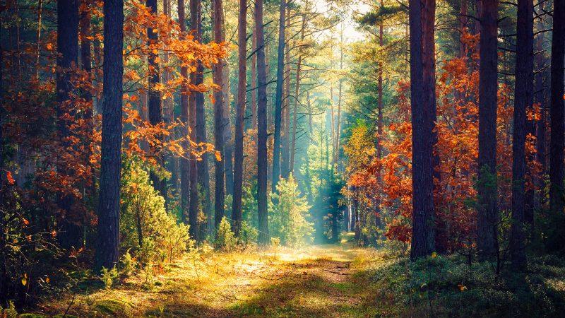 Επιτρέπεται η άσκηση στους χώρους των κρατικών δασών