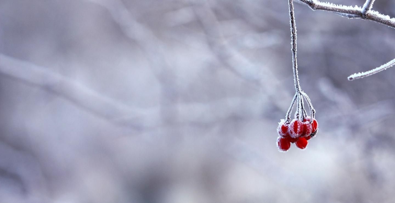frozen-201495_1280_4