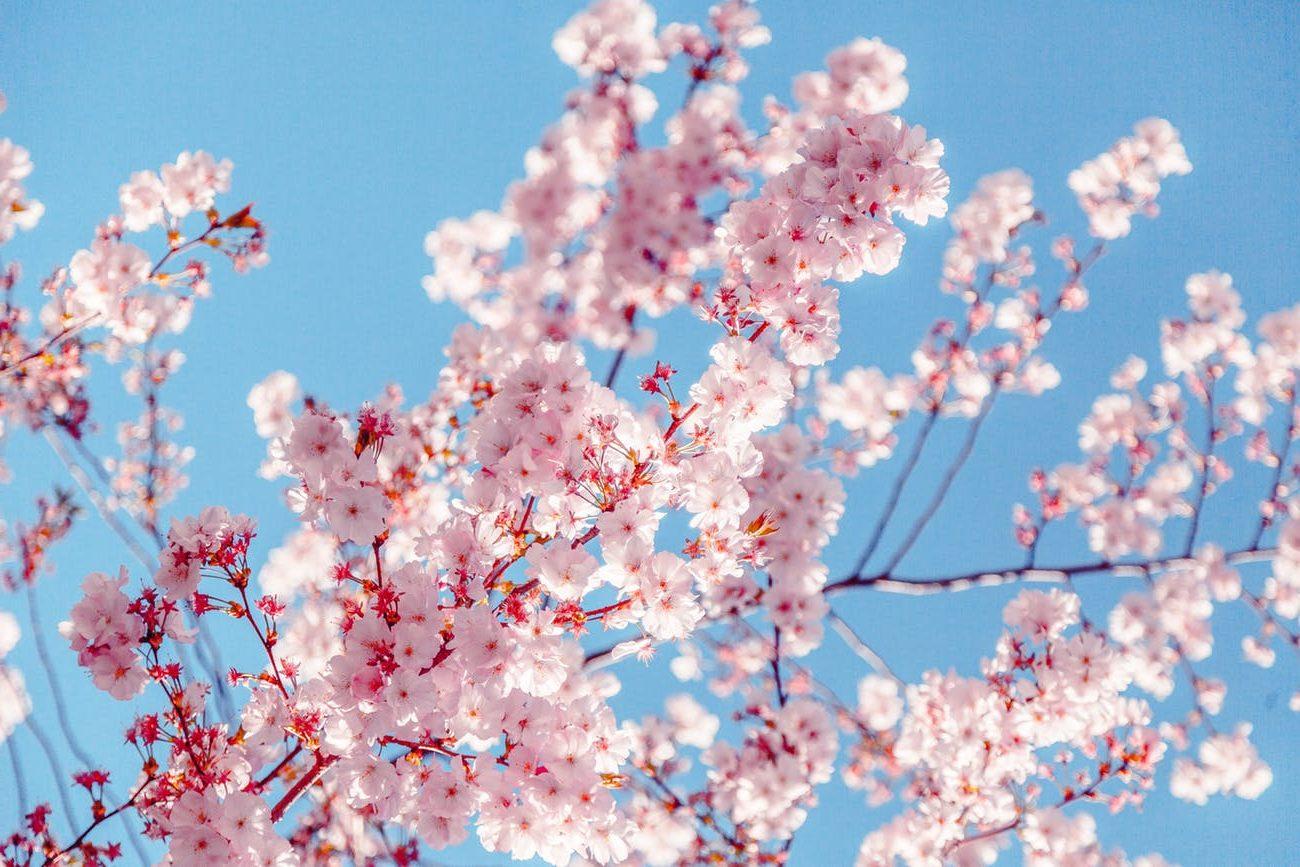 λουλούδια-e1588334264401