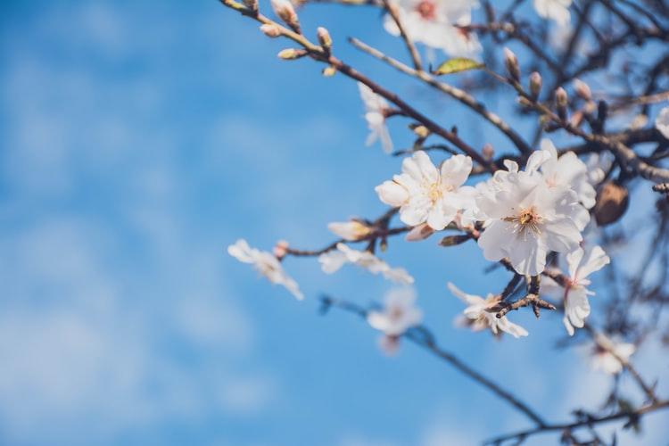 12543314-pic-this-week-in-spring