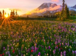 Sunset-The-Last-Rays-The-Sun-Spring-Meadow-Wild-Flowers-Yellow-Red-and-Purple-Snow-Mountain-Landscape-HD-Wallpapers-1920×1080-915×515