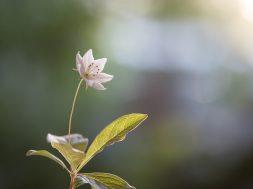 flower-4825292_960_720