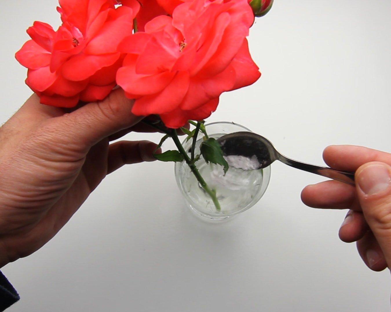 Πώς να κρατήσετε φρέσκα τα λουλούδια σας για περισσότερο χρόνο