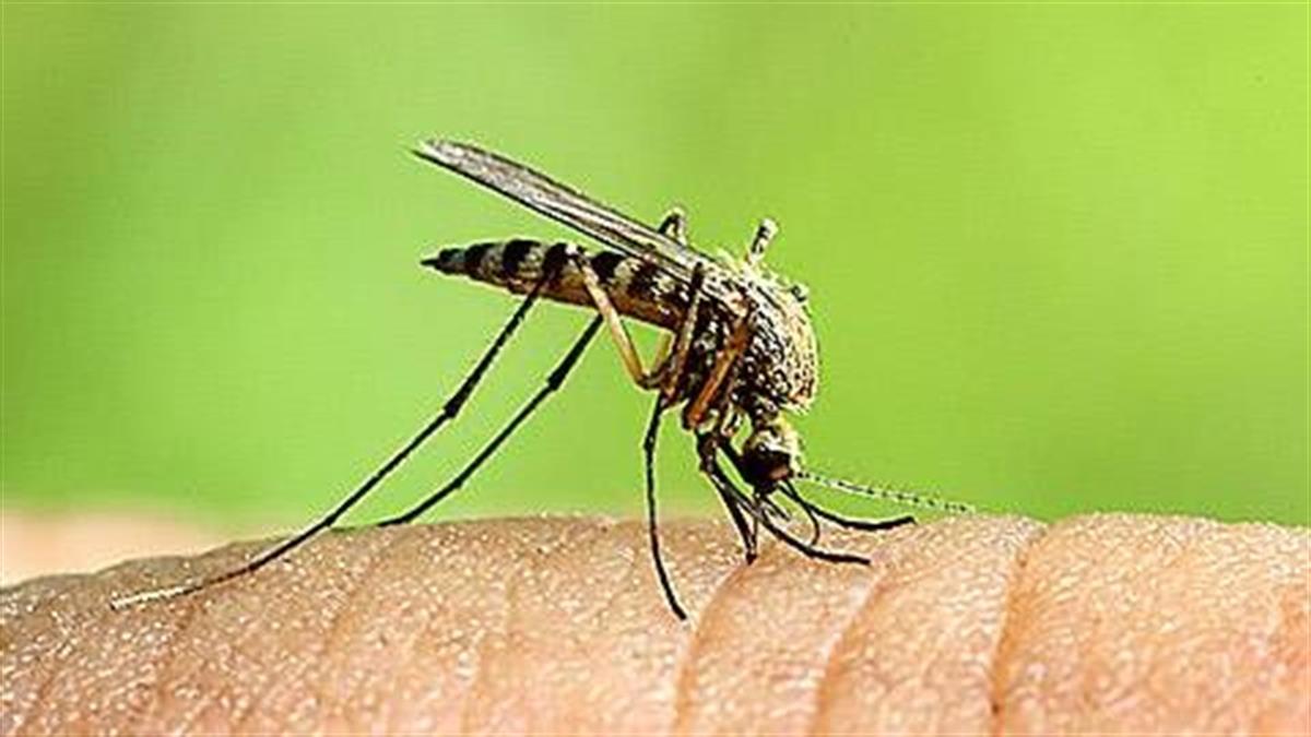 Πως να αποφύγετε το τσίμπιμα των κουνουπιών