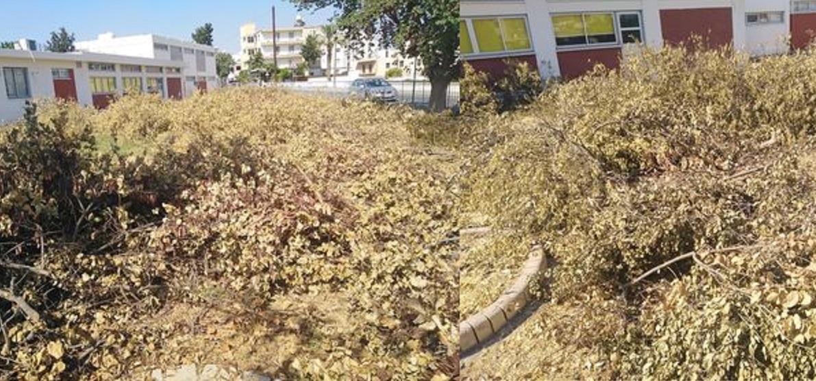 Έκοψαν το λεμονόκηπο στο Δημοτικό σχολείο της Δροσιάς (ΦΩΤΟ)