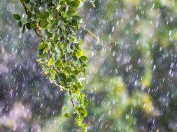 leaves-and-rain