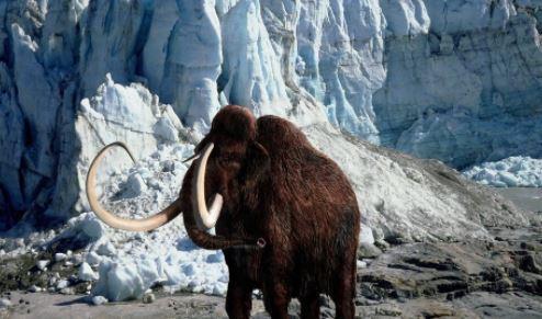 Eταιρεία βιοτεχνολογίας θέλει να αναδημιουργήσει τα μαλλιαρά μαμούθ από ασιατικούς ελέφαντες