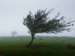 strong_wind-1